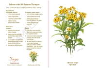 All-Seasons Tarragon